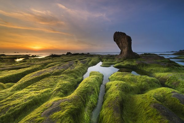 https://pixabay.com/en/coast-moss-province-cothach-3358817/